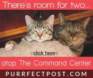 There is room for two in the Purrfect View!